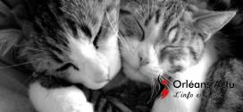 Mercredi 21 janvier : journée internationale des câlins