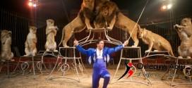 10 entrées au cirque Zavatta à gagner pour le spectacle de 20h30 du 20 février à Beaugency