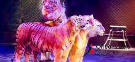 10 entrées au cirque Zavatta à gagner pour le spectacle du samedi 14 février 18h